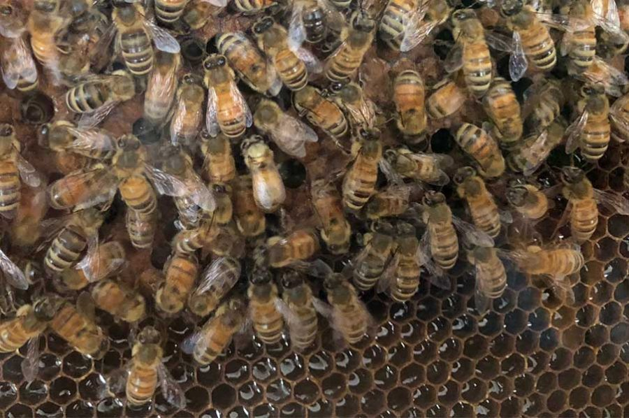 To bee or not to bee … a beekeeper