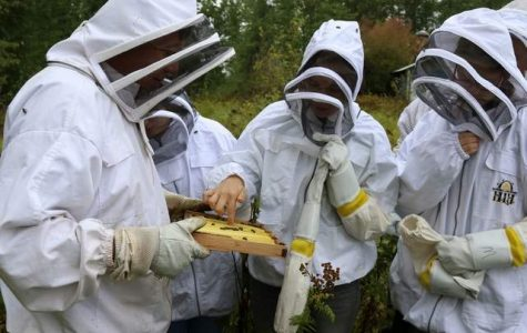 LPOHS Gets hands-on with Bees